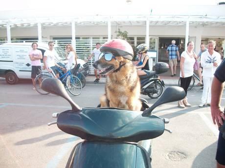 Cane che guida moto avvelenato