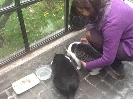 Boldrini Appello Su Facebook Come Chiamo Mio Gatto Nero Obama