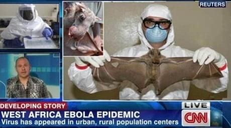 ebola-carne