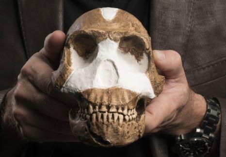 Homo-Naledi