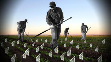 agricoltori-usa
