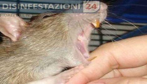 Valentina, morsa da un ratto a Trastevere Stavo chiacchierando con degli amici