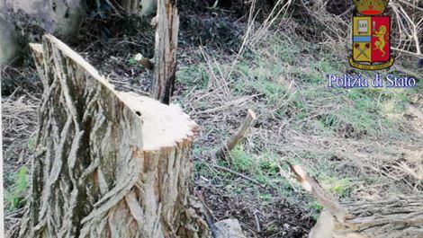 alberi-secolari