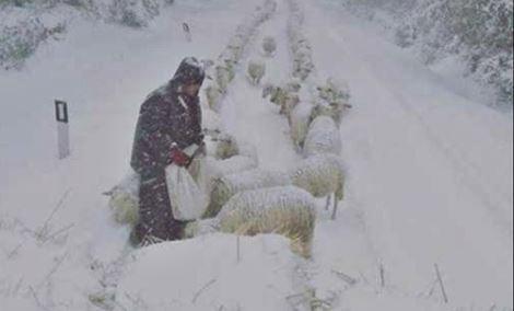 animali-neve