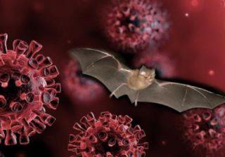 Pipistrelli della Nigeria