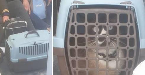 migranti sbarcano con valigie e gatto siamese