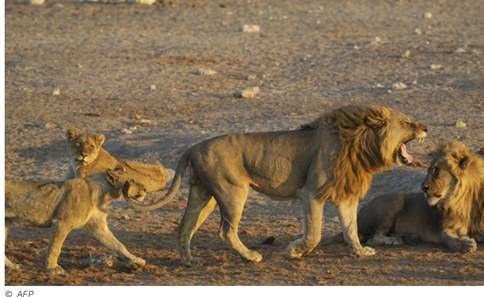 leoni ricerca