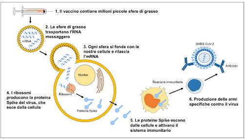 Vaccini ad mRNA