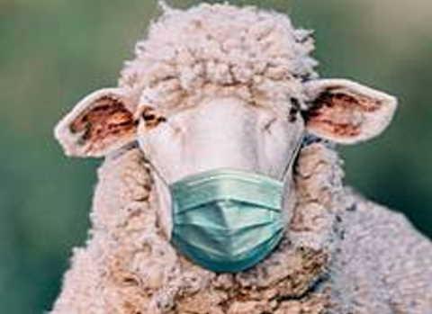 sono le pecore a limitarci i diritti