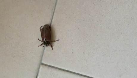 casa famiglia scarafaggi