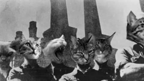sciopero a gatto selvaggio